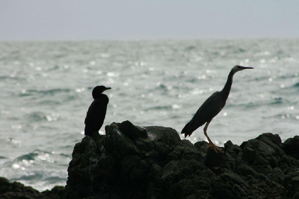 Vögelzeugs