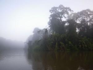 Morgennebel am Dschungelfluss